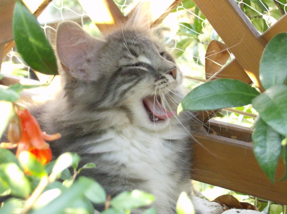 I cibi che fanno male ai gatti