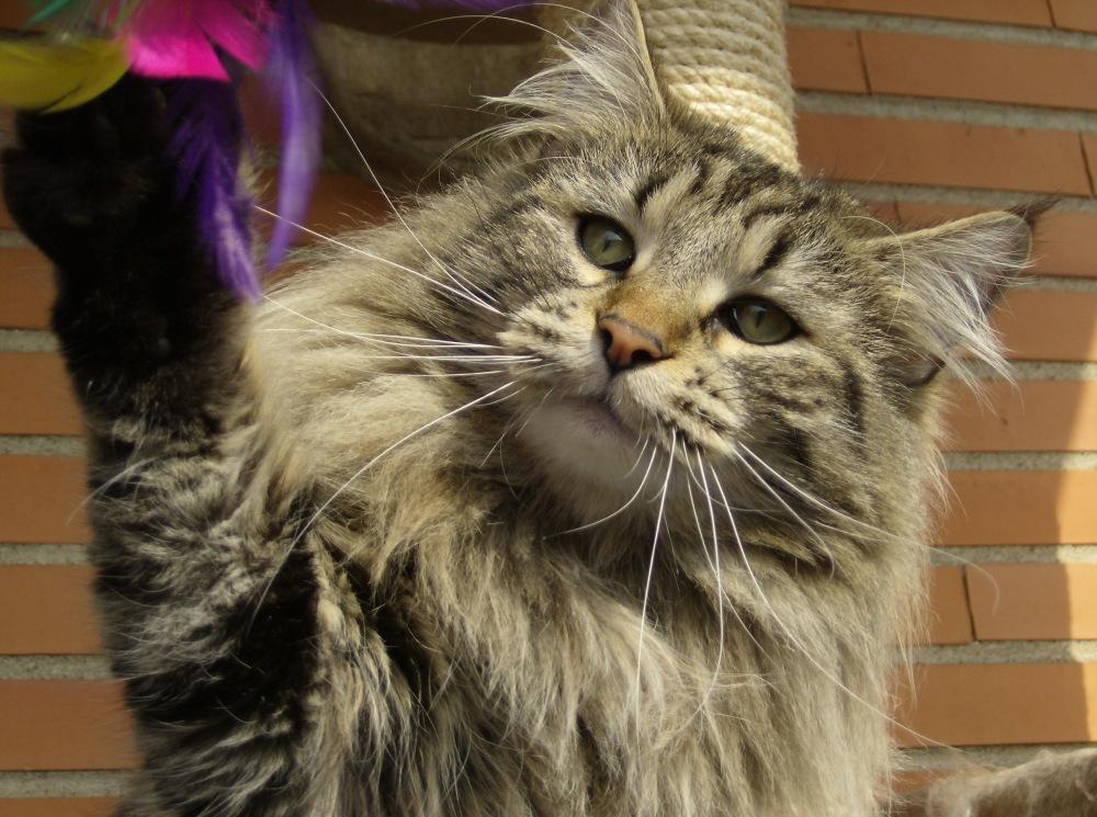 L'alimentazione del gatto. Cosa sono gli alimenti complementari ?