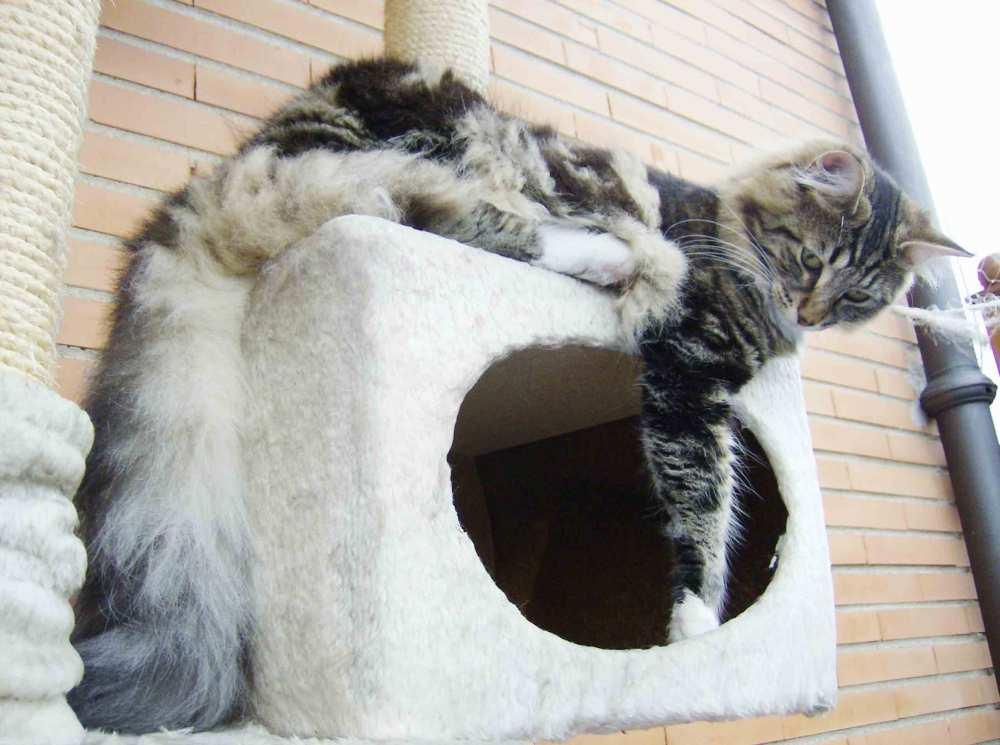 L'alimentazione del gatto. Le diete a base di carne cruda