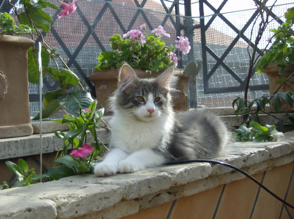 Dovrei preoccuparmi se il mio gatto mastica il cartone ?