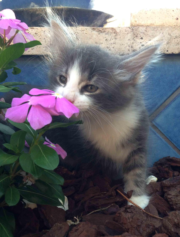10 piante velenose per i nostri gatti e forse non lo sai for Piante velenose per i gatti
