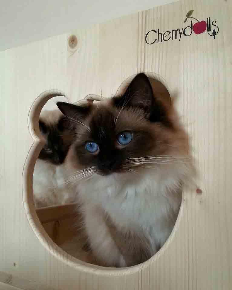 Perché i gatti amano cosi' tanto le scatole ?